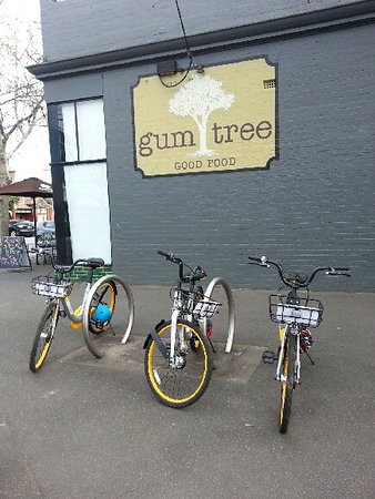 Gum Tree Good Food - Food Delivery Shop
